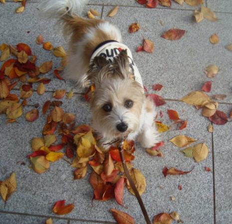 落ち葉とリプ
