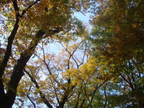 中村神社の木