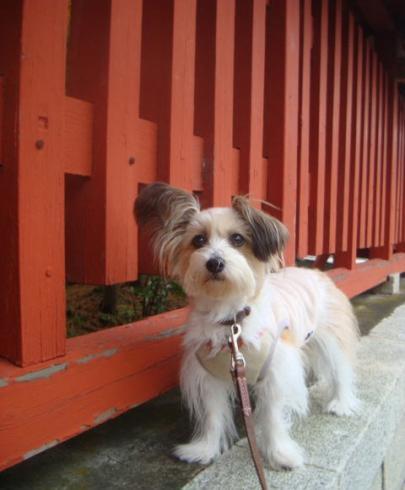 尾崎神社の赤い塀