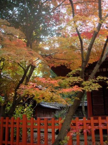 尾崎神社~もみじの紅葉