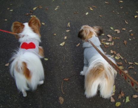 並んで歩く犬