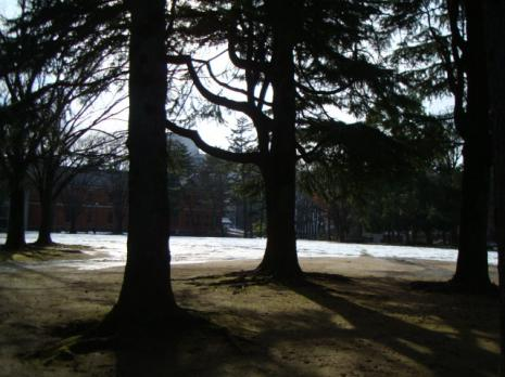 中央公園の木
