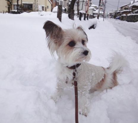 雪に阻まれる