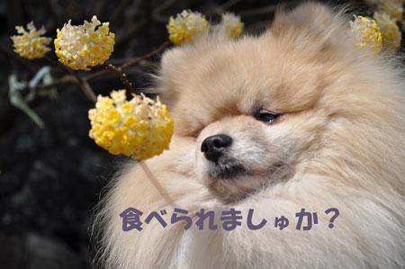 20100322_0097.jpg