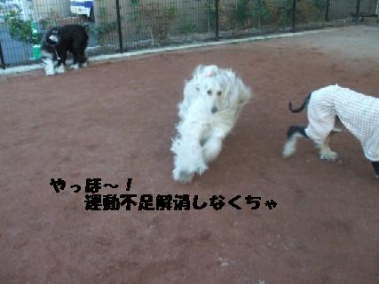 2010_01060325.jpg