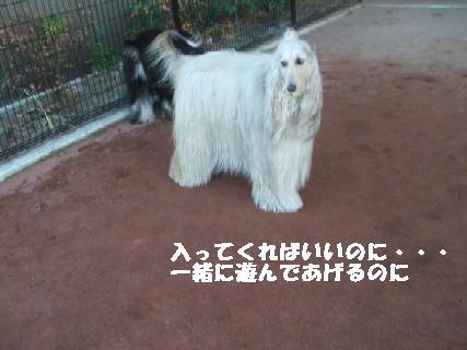 2010_01060329.jpg