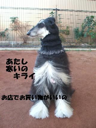 2010_01060339.jpg