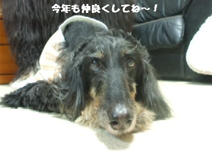 2010_01070357.jpg