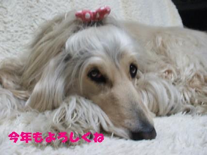 2010_01070363.jpg