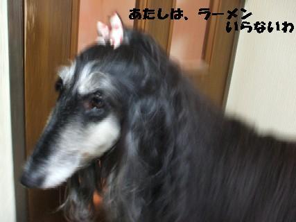 2010_01070367.jpg