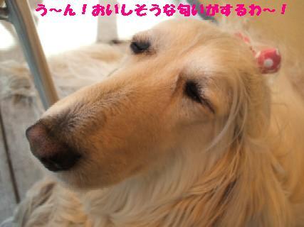 2010_01200413.jpg