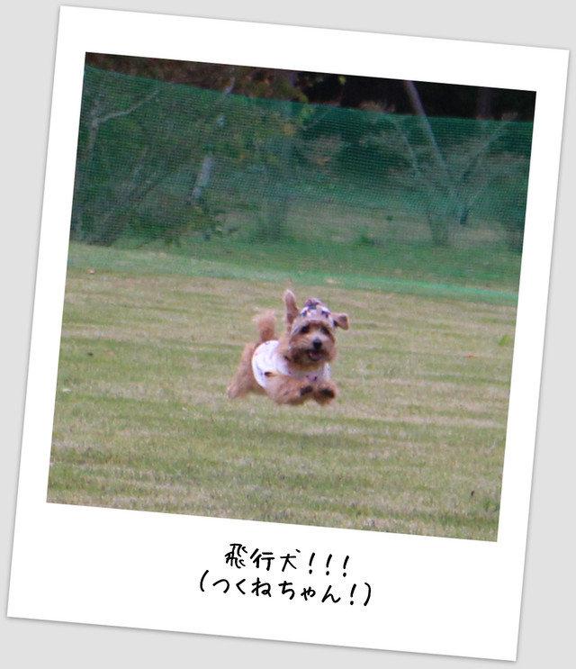 飛行犬つくねちゃん