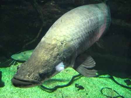 220313熱帯魚3