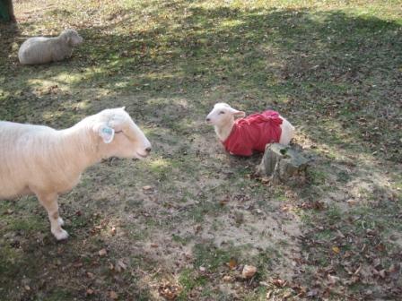 221121子羊