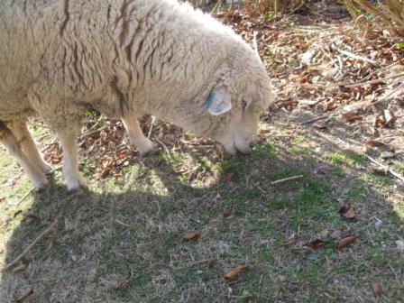 221121羊