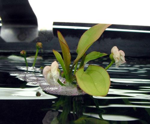 水草画像1