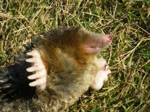 CAT+053_convert_20091218011014.jpg