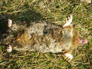 CAT+056_convert_20091218011146.jpg
