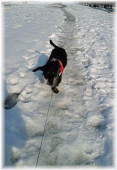 雪道もげんき