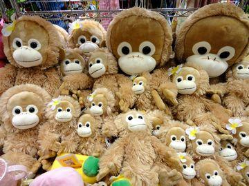 お猿さん!