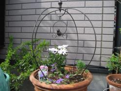 小鳥のオーナメントつき寄せ植え>ゲラニウム、オステオスペルマム&マーガレット