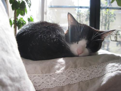 ネネちゃんのお昼寝