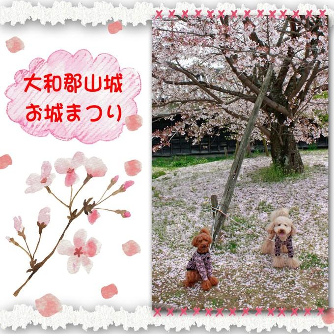 13_20120418220742.jpg