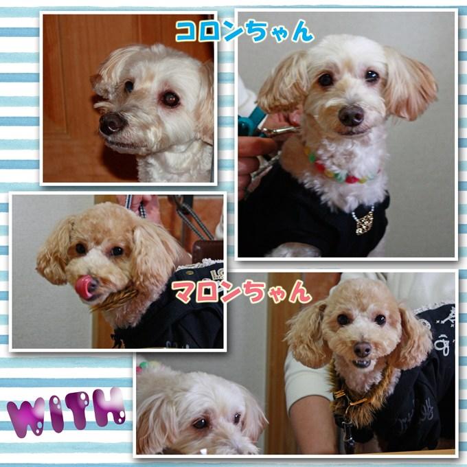 23_20120318202421.jpg