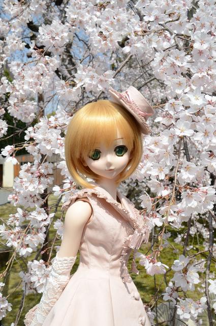 小隠里@今年初の里訪問は桜が満開