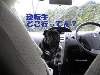 運転手は?