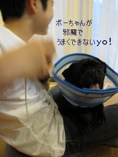 IMG_20120409__04.jpg