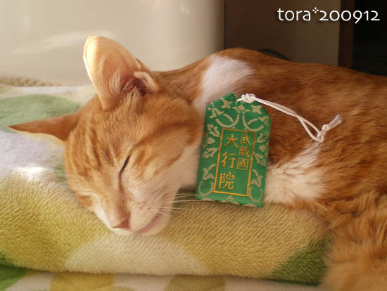 tora09-12-106.jpg