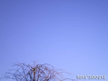 tora09-12-118.jpg