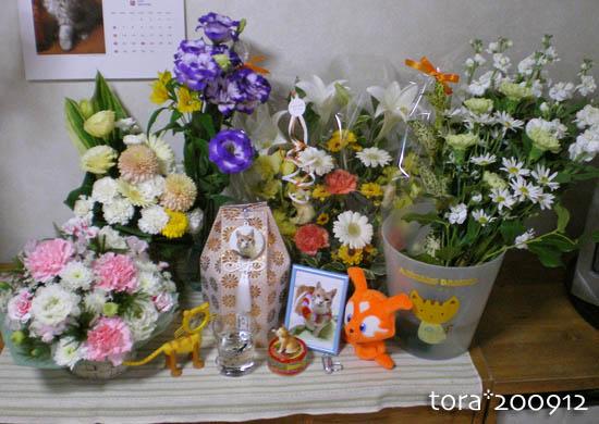 tora09-12-131.jpg