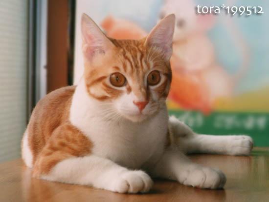 tora10-01-06.jpg