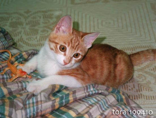 tora10-01-117.jpg