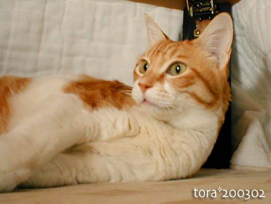 tora10-01-38.jpg