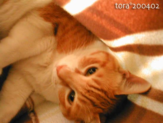 tora10-01-51.jpg
