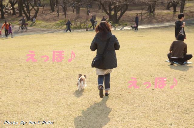 DSC_0018_20120405211257.jpg