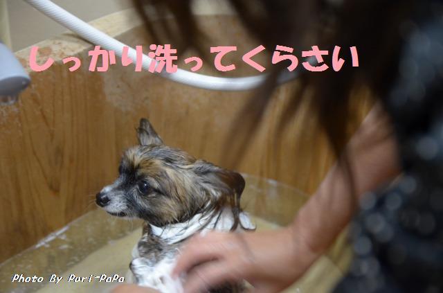 DSC_0343_20120423065156.jpg
