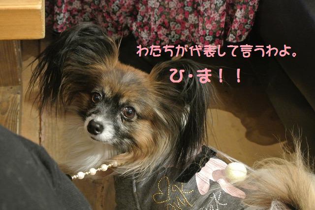 DSC_0855_20120219195936.jpg