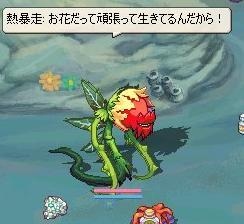 一応花です