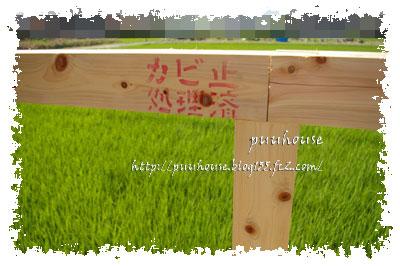 20110808040.jpg