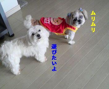 2011050312460002.jpg
