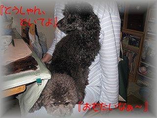 IMG_6297_20101216203620.jpg