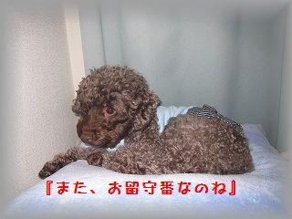 IMG_7192_20101210132851.jpg