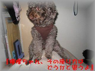 IMG_9539_20110119202252.jpg