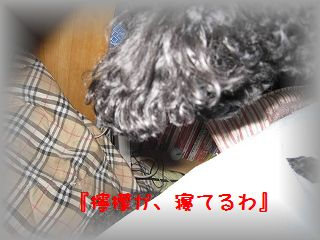 IMG_9928_20110204194523.jpg