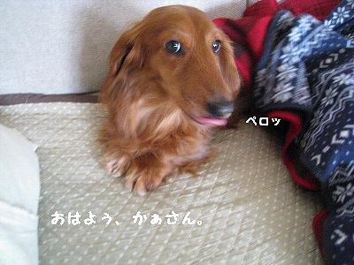 201003051.jpg