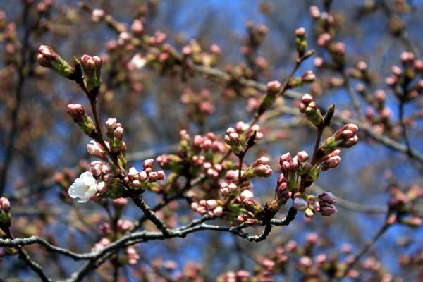桜も咲くね。。